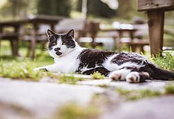 THEMENBILD - eine schwarz weisse Katze auf der Palfner Alm, aufgenommen am 09. Spetember 2018 in Rauris, Österreich // a black and white cat at the Palfner Alm, Rauris, Austria on 2018/09/09. EXPA Pictures © 2018, PhotoCredit: EXPA/ JFK