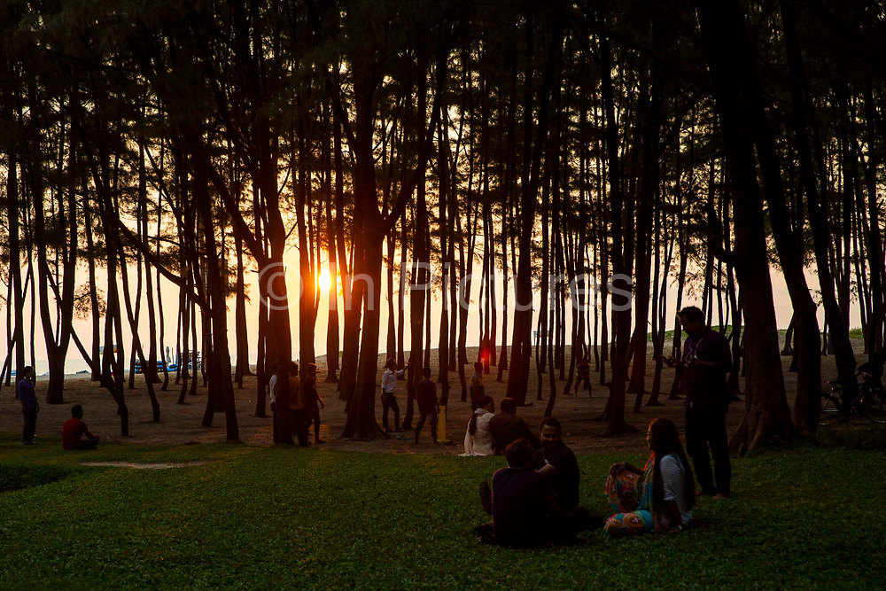 Warm glow of sunset through woods in on the edge off Laboni Beach looking out to the Bay of Bengal near in Cox Bazar, Chittagong Division, Bangladesh, Asia.