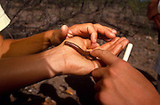 Camp Chiricahua participants handle a non-venemous millipede, Chiricahua Mountains, Arizona..Media Usage:.Subject photograph(s) are copyrighted Edward McCain. All rights are reserved except those specifically granted by McCain Photography in writing...McCain Photography.211 S 4th Avenue.Tucson, AZ 85701-2103.(520) 623-1998.mobile: (520) 990-0999.fax: (520) 623-1190.http://www.mccainphoto.com.edward@mccainphoto.com.