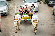 19 JUNE 2013 - YANGON, MYANMAR:   An ox cart is driven down Sule Pagoda Road in the heart of Yangon.   PHOTO BY JACK KURTZ