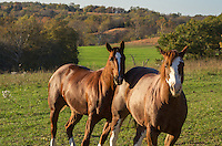 After hiking to the top of a bluff I noticed a couple horses in a nearby pasture. They walked up to see what I was doing when they noticed me.