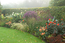 The late season border on a misty autumn morning including dahlias, asters, cannas and Stipa tenuissima