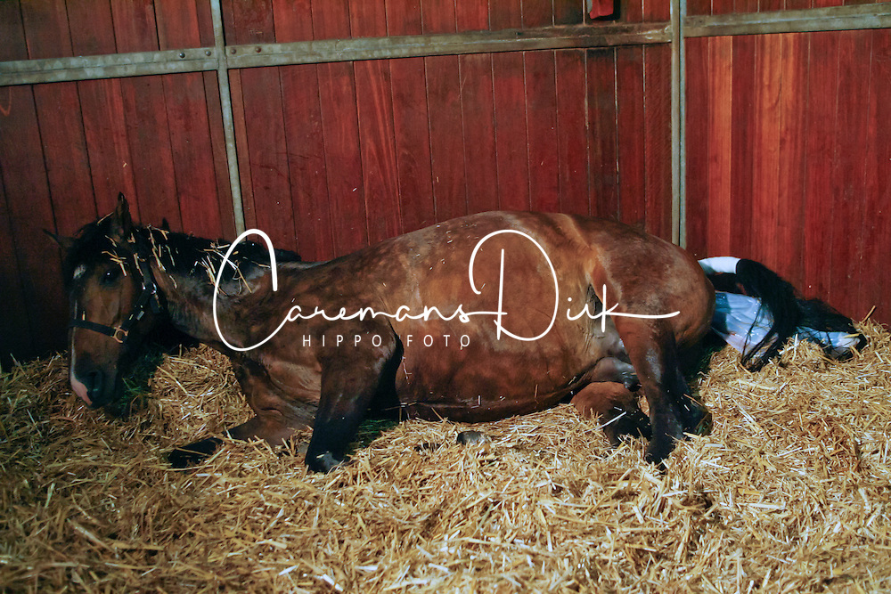 Birth of a foal<br /> Stal Roelofs - Den Ham 2009<br /> © Hippo Foto - Karin Van Der Meul