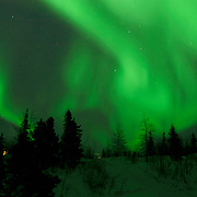 Northern lights shine brightly over black spruce trees in Wapusk National Park in temperatures of -46F. Canada