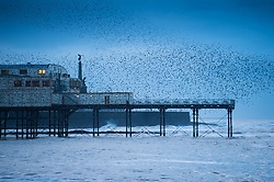 © London News Pictures. 04/12/2016. Aberystwyth, UK. A murmuration of starlings perform spectacular displays in the air above Aberystwyth pier at dusk on  Cardigan Bay in west Wales Each evening between October and March tens of thousands of the birds fly in huge 'murmurations; in the sky above the town before settling to roost for the night on the cast iron legs of the Victorian seaside pier.. Photo credit: Keith Morris/LNP