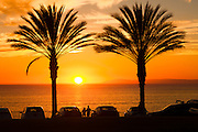 Palm trees silhouetted at sunset in Dana Point, California