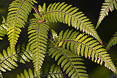 Ferns & Allies