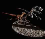 "Professor John Ostrom of Yale University discovered Deinonychus, a pack-hunting dinosaur that terrorized victims during the Cretaceous with sicklelike claws on its feet.  Deinonychus means ""terrible claw."""
