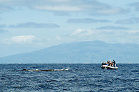 Whale watching, Pico, Azores, Portugal.