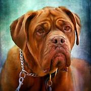 Animal Art images