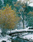 First snow of autumn along Chloride Creek, Black Range, Gila National Forest, New Mexico.