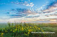 63893-03713 Sunrise and prairie Prairie Ridge State Natural Area Marion Co. IL