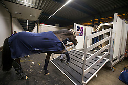 Charlotte Dujardin's, (GBR), Valegro getting into the flying stall<br /> Departure of the horses to the World Cup Finals in Las Vegas from Schiphol - Amsterdam 2015.<br />  © Hippo Foto - Dirk Caremans