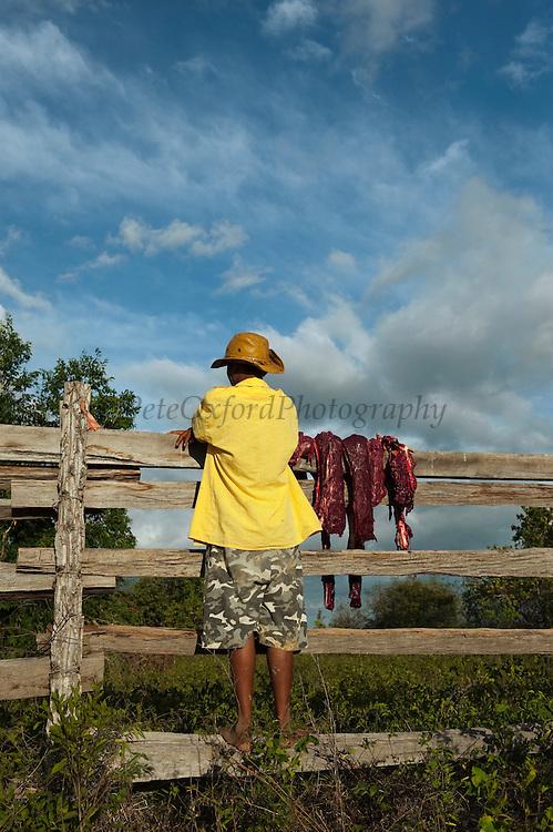 Slaughtering Cow<br /> Kwaimata Village<br /> Rupununi<br /> GUYANA<br /> South America