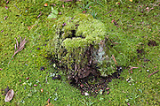 tree stump fully covered with moss