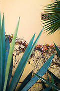 Cultural details and plant life of the small farming town El Pescadero, Baja Sur, Mexico.