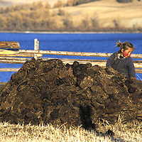 MONGOLIA, Darhad Valley.  Youngster plays on pile of animal dung to be used as fuel for nomadic family's ger (yurt).