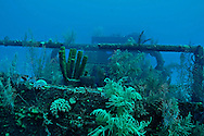 Stern encrusted with coral, Doc Paulson, Grand Cayman