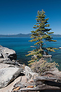 A single tree sits on the rocky shore of Lake Tahoe at Secret Cove.