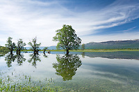 Flooded trees: mainly white willow (Salix alba). Cirrus clouds. Livansko Polje -  karst plateau: is arguably the largest karst field in the world. Ramsar site. May 2009. Bosnia-Herzegovina.<br /> Elio della Ferrera / Wild Wonders of Europe