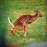 20200701-deer