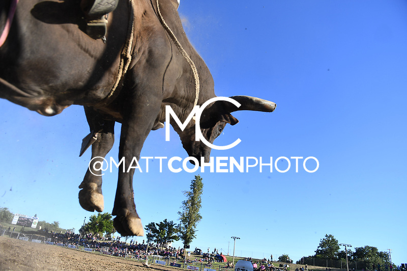 Chris Byrd / K649/0 Holey Kat, Marysville 2018<br /> <br /> <br /> UNEDITED LOW-RES PREVIEW<br /> <br /> <br /> File shown may be an unedited low resolution version used as a proof only. All prints are 100% guaranteed for quality. Sizes 8x10+ come with a version for personal social media. I am currently not selling downloads for commercial/brand use.