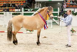 , 64 - Pferdestammbuch 11. - 13.02.2011, 040 - DAN VOM ODERHAFF - Sieger