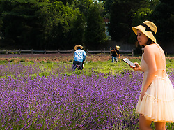 Asian woman with a cell phone at a lavender garden