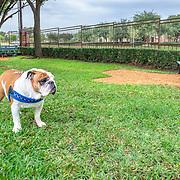 Vine South Fitness & Pet Park 10.12.18