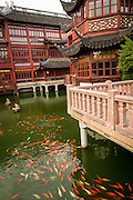 Koi in the pond around the Huxinting Teahouse in Yu Yuan Gardens Shanghai, China