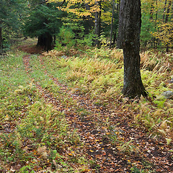 An old woods road in West Fairlee, Vermont.  Brushwood Community Forest project.