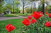 Fairmont Park, Philadelpha, PA, tulips