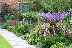 The purple themed border at Sissinghurst Castle Garden in May