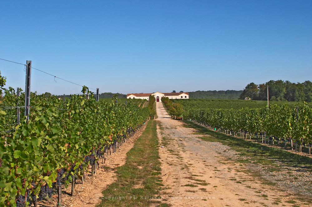 Vineyards, tractor road and the winery in the distance - Chateau de la Tour (or Clos de La Tour), Bordeaux, now Pey la Tour