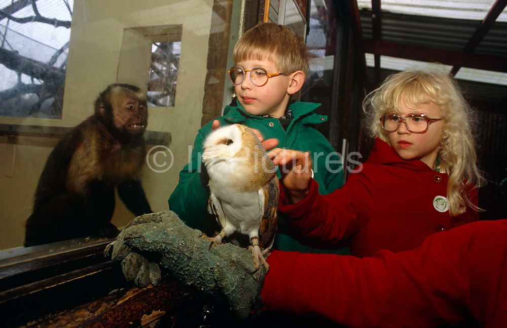 As a small monkey looks on through the thick glass of its enclosure, we see two unsighted children reaching out to feel the soft feathers of a Barn Owl. As part of their learning experience as blind (or near-blind) children as well as the extra therapy of heightening their touch sensensation.<br /> The Barn Owl (Tyto alba) is the most widely distributed species of owl, and one of the most widespread of all birds. It is also referred to as Common Barn Owl, to distinguish it from other species in the barn-owl family Tytonidae. These form one of two main lineages of living owls, the other being the typical owls (Strigidae). Drusillas Park is a small zoo near to Alfriston, in East Sussex targetting children aged between about 2 to 10. The zoo is home to many exotic wild and domestic animals with hands-on activities such as this.