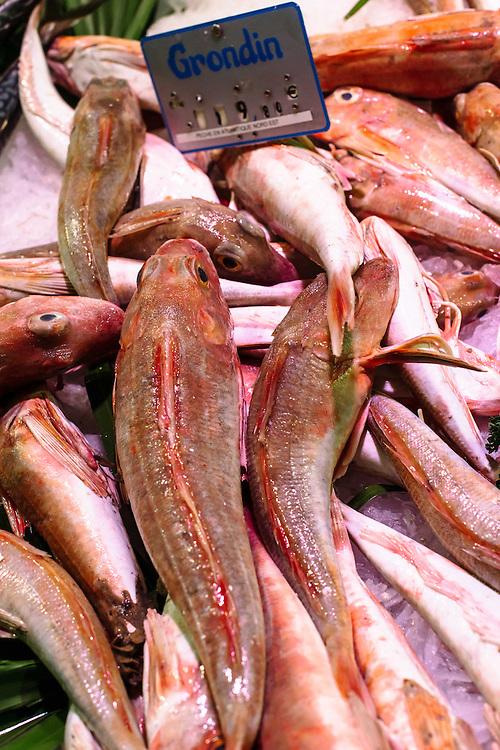 Grondin fish
