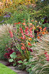 Border with Dahlia 'Karma Choc' and D. 'Jescot Julie', Gladiolus 'Antica' and Hibiscus acetosella at De Boschhoeve