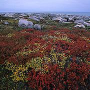 Tundra in autumn colors near Churchill, Manitoba. Canada.