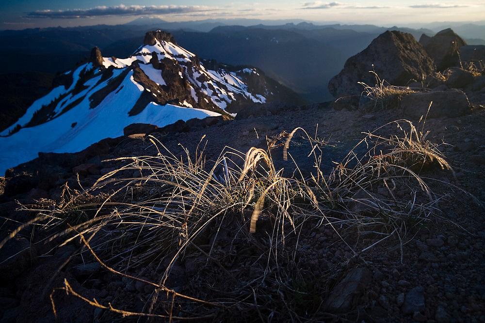 Sunset light strikes wind swept grasses on a high ridge above Goat Lake in Goat Rocks Wilderness, Washington.