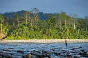 Riverbank of The Alto Madre de Dios River, Manu National Park, Peru, South America