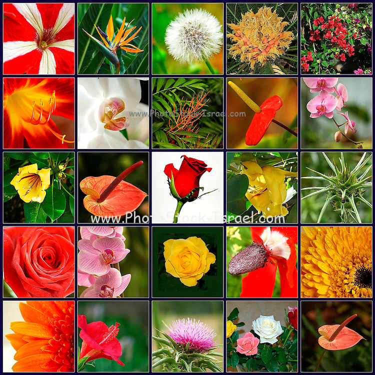 Square collage of 25 image of flowers
