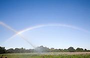 Rainbow created by crop irrigator spraying water on potatoes, Shottisham, Suffolk, England