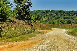 Remote gravel road in Banner Marsh