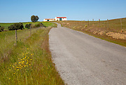 Minor small country surfaced road passing through rural countryside area with blue sky and farm buildings, near Castro Verde, Baixo Alentejo, Portugal, Southern Europe