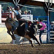 Geral Eash on Red Eye Rodeo Bull Mt Livestock Pretty Boy at the Darby MT Elite Proffesionals Bull Riding Event July 7th 2017.  Photo by Josh Homer/Burning Ember Photography.  Photo credit must be given on all uses.