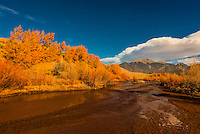 Fall foliage along Medano Creek in Great Sand Dunes National Park and Preserve, near Mosca, Colorado USA.