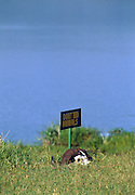 A buffalo skull in the grass by a lake in the Serengeti National Park in Tanzania