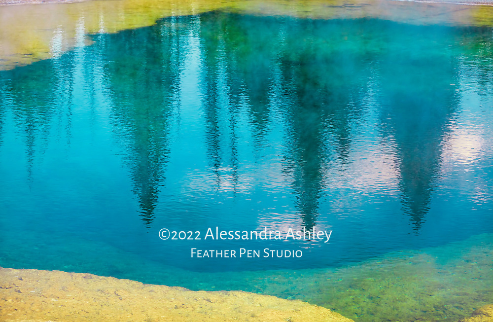 Row of evergreens reflected in Morning Glory Pool on a cold autumn evening, moments before snow began to fall. Yellowstone National Park, Wyoming.