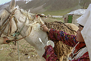 """A Kyrgyz woman applies a mixture of yoghurt and Turmeric to cure a wound on her husband's horse. Kara Jelgha (""""black valley"""") summer camp. The campment of Abdul Rashid Khan, the king of the Kyrgyz.<br /> <br /> Adventure through the Afghan Pamir mountains, among the Afghan Kyrgyz and into Pakistan's Karakoram mountains. July/August 2005. Afghanistan / Pakistan."""
