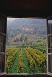 Europe, Italy, Tuscany, Lucca, view through hotel window out to rows of grapes in vineyard.